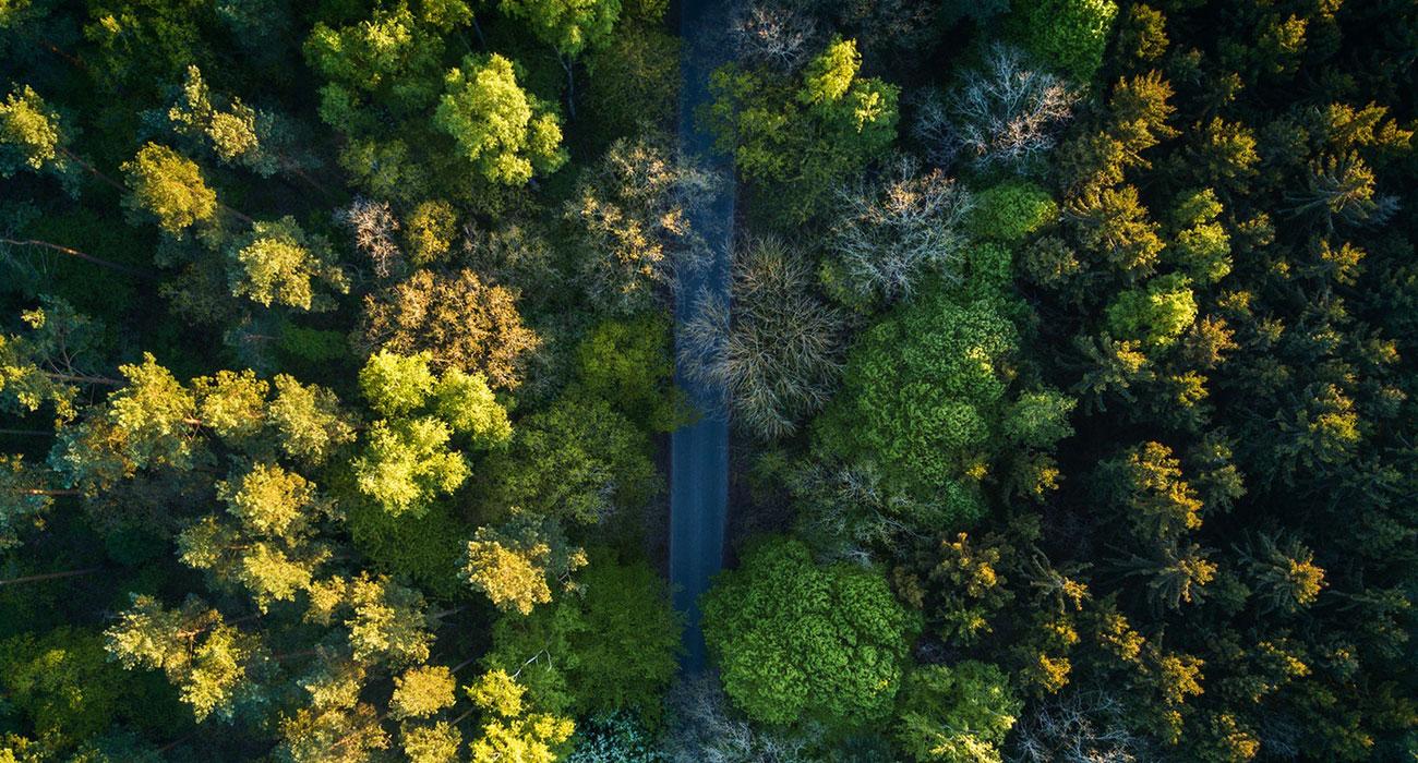 Straße durch Wald aus Vogelperspektive