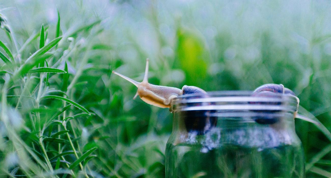 Glas mit herauskriechender Schnecke steht in hohem Gras